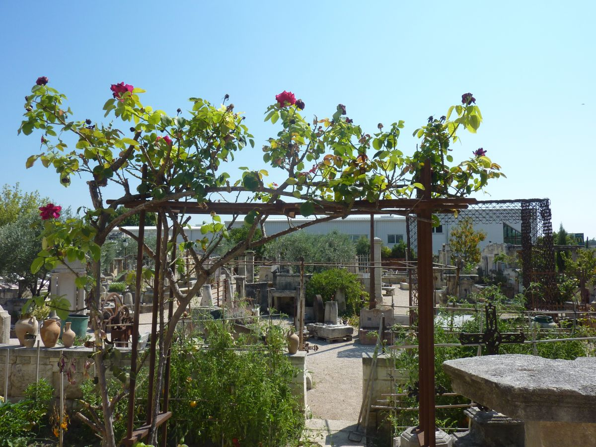 Pergolas and rose gardens