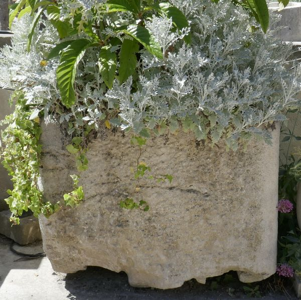 Old white stone trough - a stone basin that can be used as a stone planter.